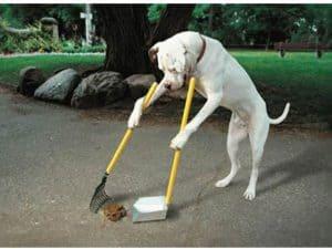 Dog poop in France