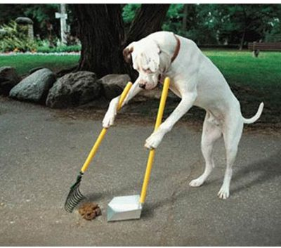 Dog poop in France revisited: It gives people jobs!