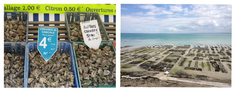 Oysters Cancale, France