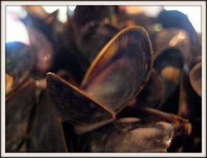 Brittany France mussels