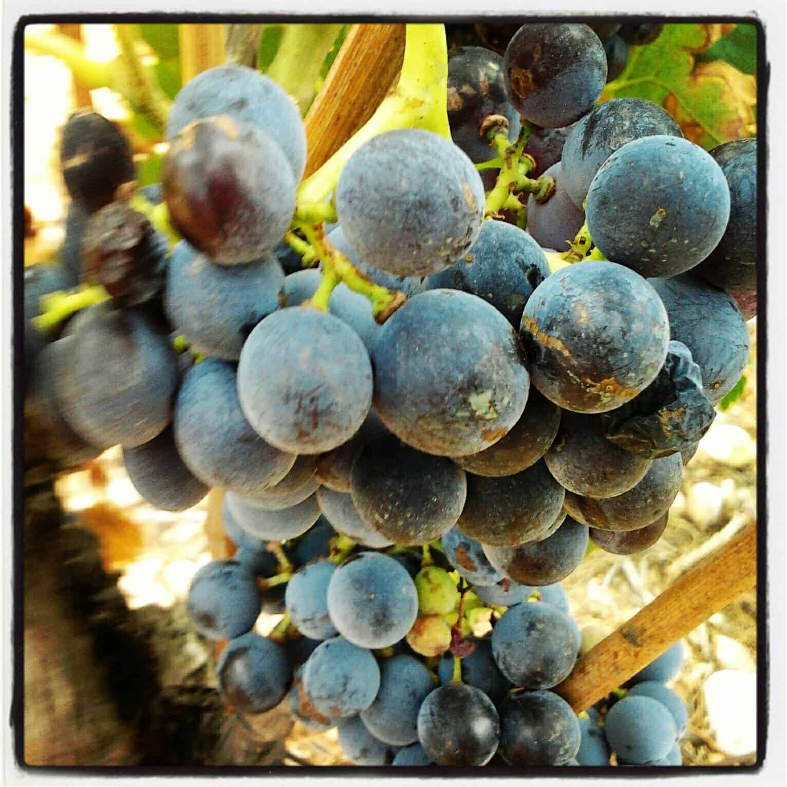 South of France wine tour