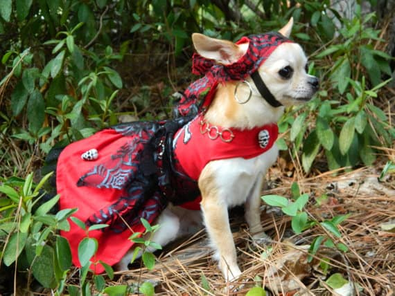 Halloween etsy pirate dog costume