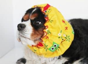 daydogdesigns snood