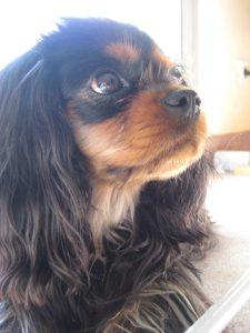 Dagny the dog