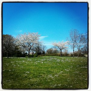 Beautiful spring day instagram