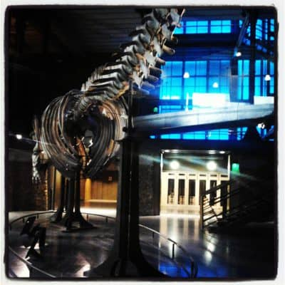 May pics of the month: Paris Natural History Museum