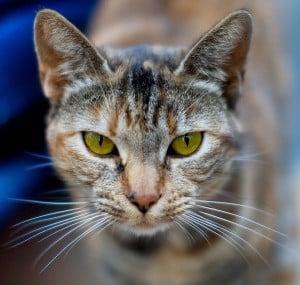 Cat story expat stories