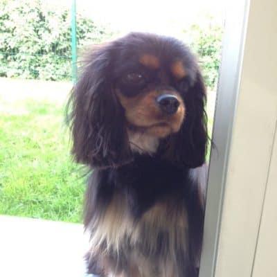 Animal communication: Yes, my dog can talk