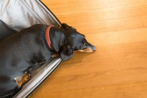 summer travel must haves dog in suitcase