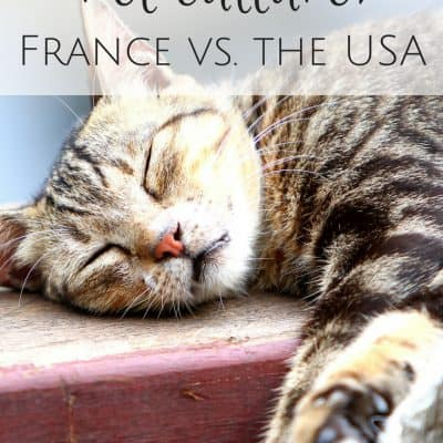Pet culture in France vs. the USA