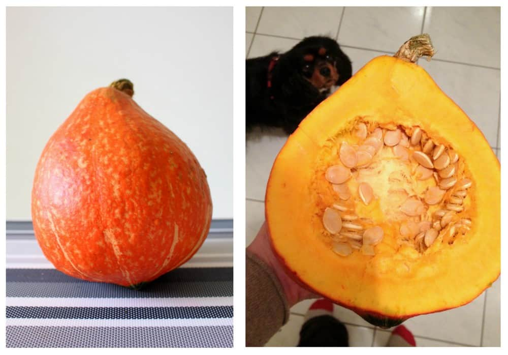 oui in france we found pumpkins and a potimarron. Black Bedroom Furniture Sets. Home Design Ideas