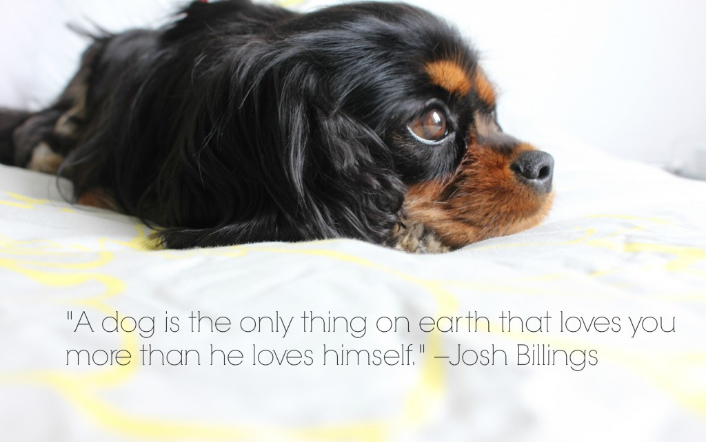 Dagny Cavalier King Charles quote