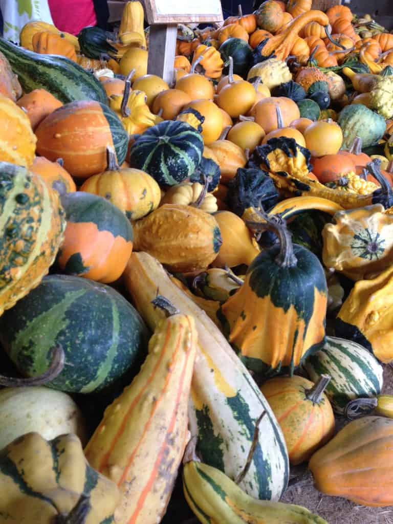 Gourds in France