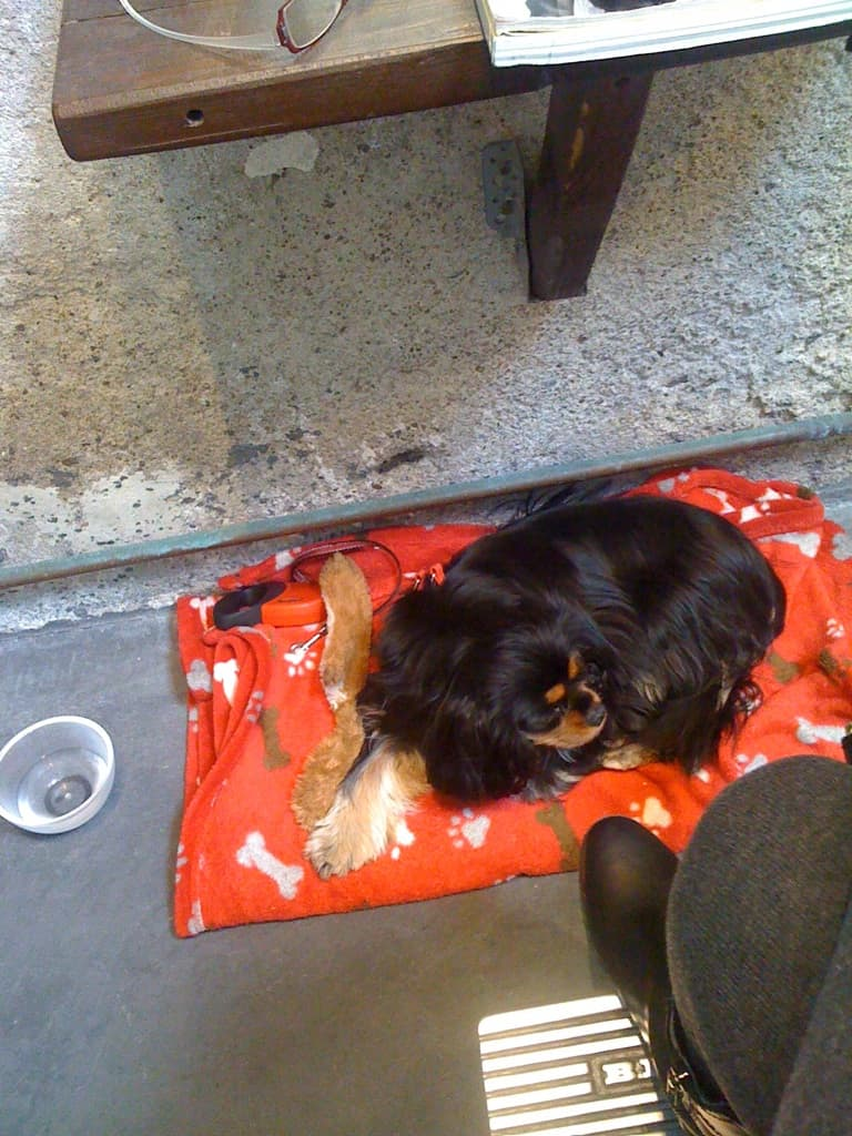 dog at hair salon in france