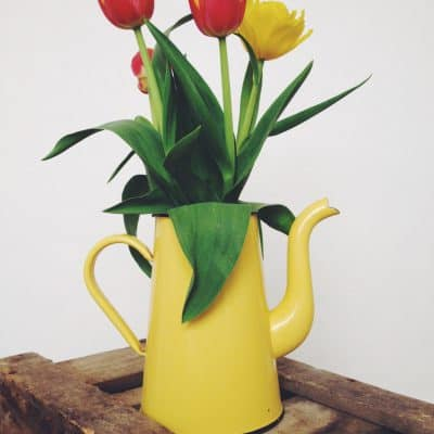 April pics of the month: Spring tulips and a cafetiere