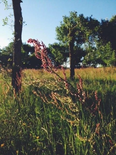 flowers-in-field-france