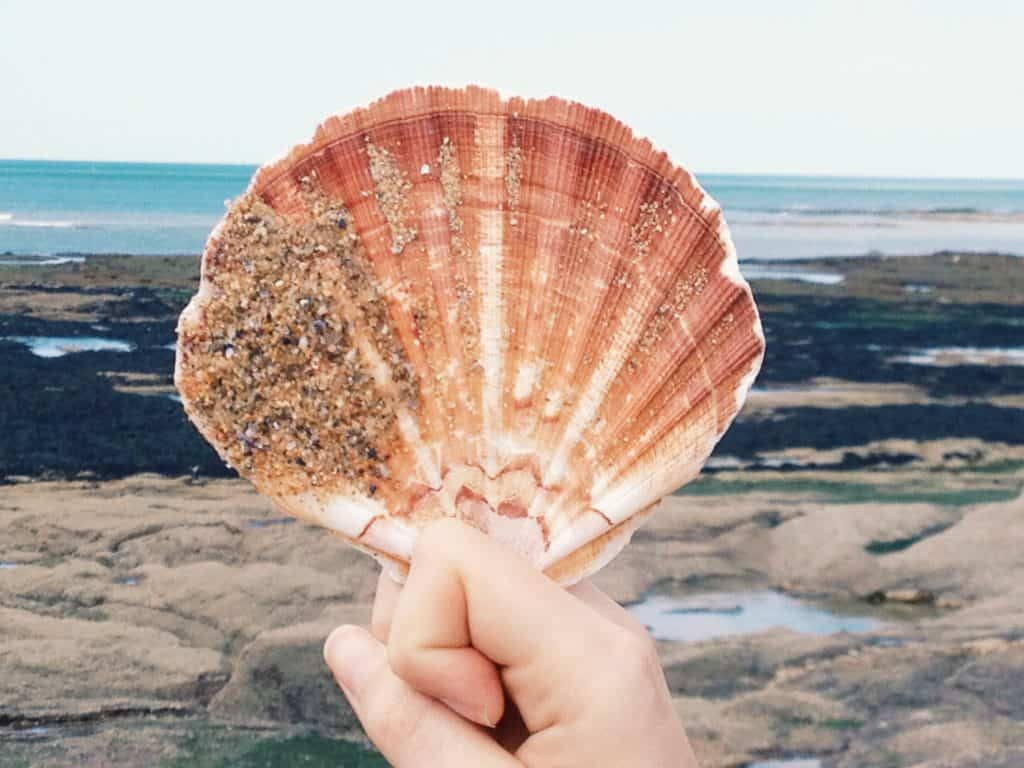 shell-on-beach