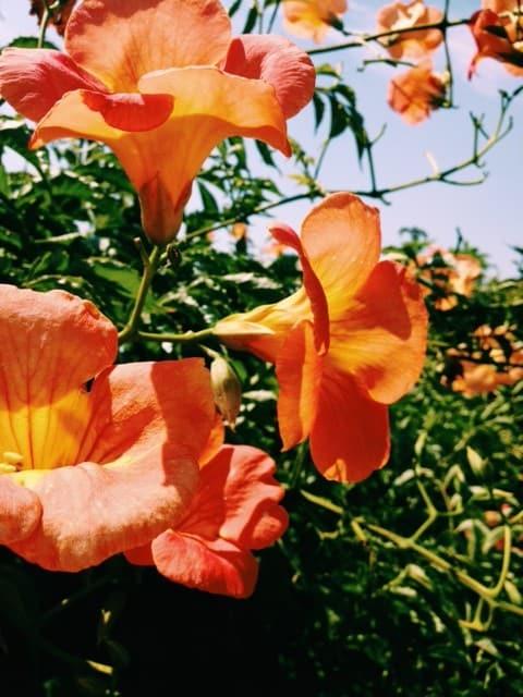 orange-backyard-flowers