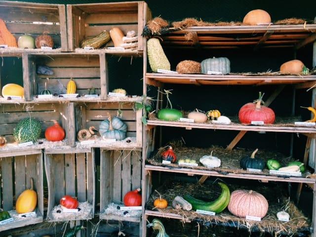 pumpkin-varieties-in-france