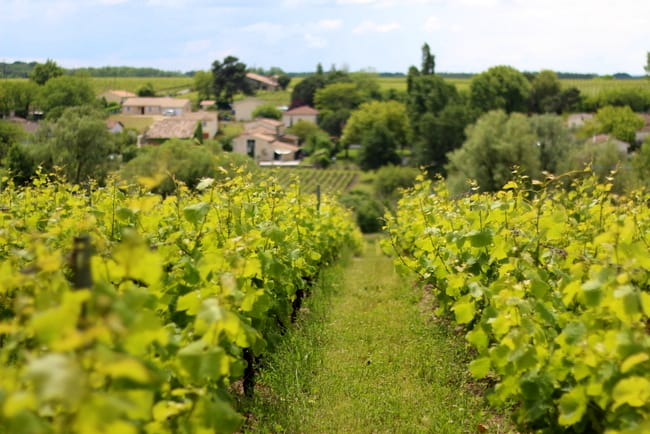 French-vinyard