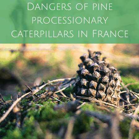 Dangers of pine processionary caterpillars in france