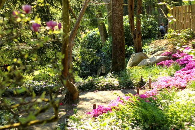 parc oriental de maulevrier flowers