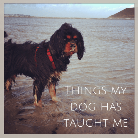 life lessons from my dog