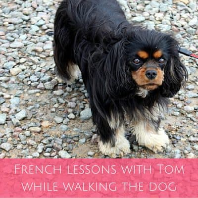 French lessons with Tom while walking the dog… no your dog isn't a pervert!
