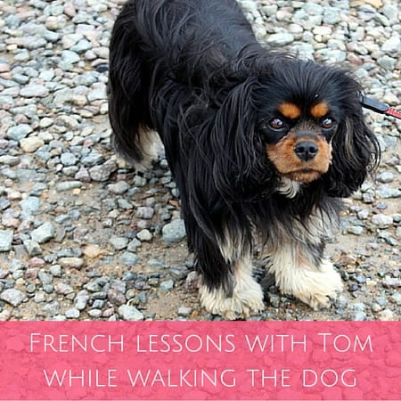 French lessons with Tom while walking the dog