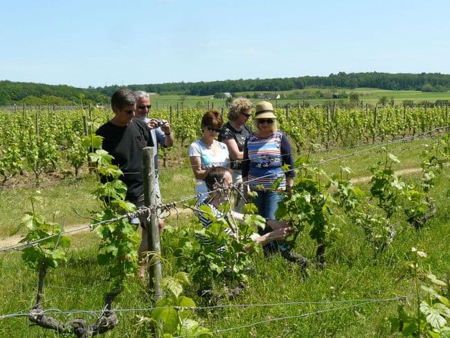 angers wine tour france