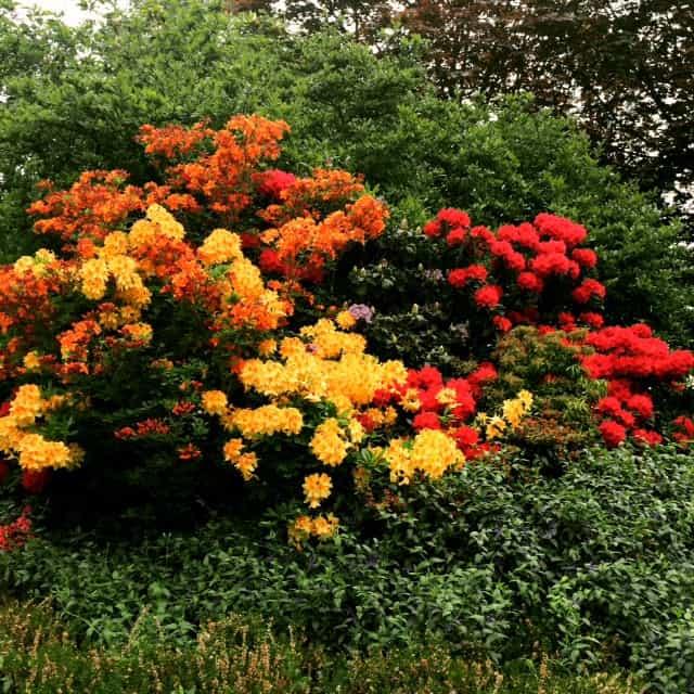 beautiful flowers in france