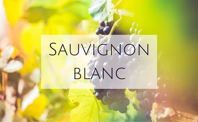 sauvignon blanc pronunciation