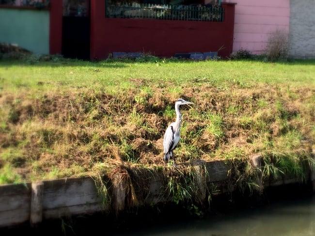 heron on canal de la marne au rhin