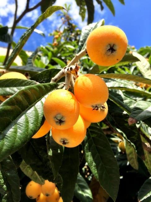 canal du midi fruit
