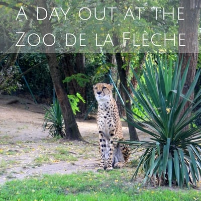 A day out at the Zoo de la Flèche (1)
