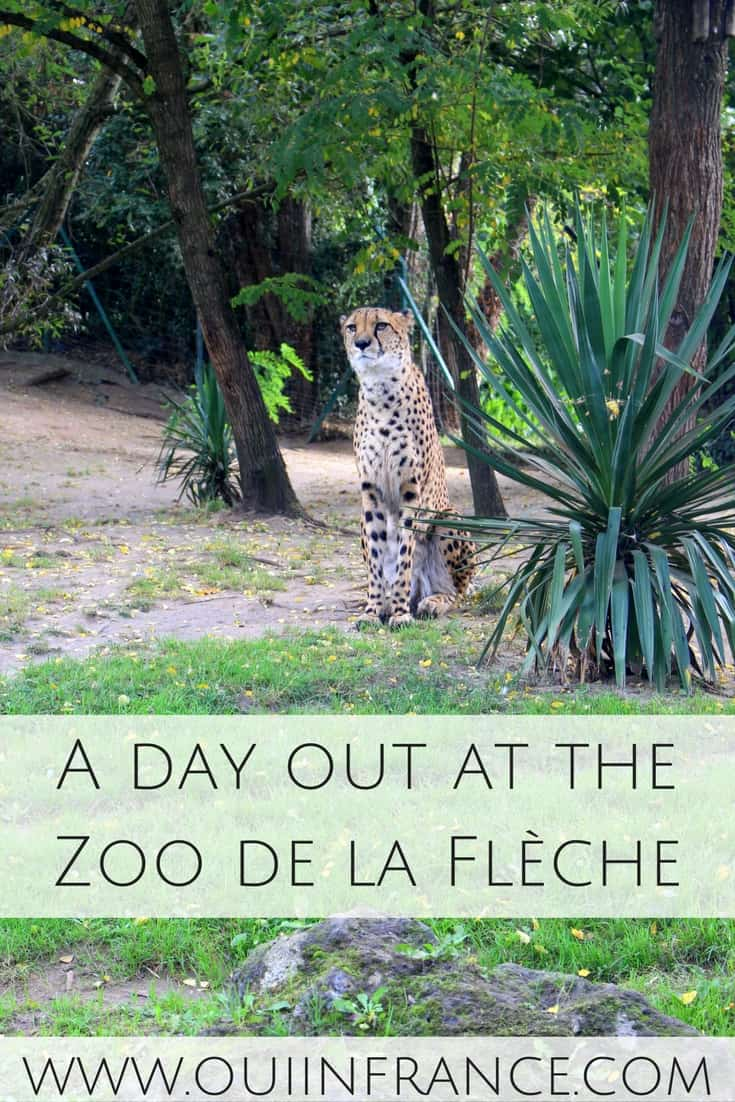 A day out at the Zoo de la Flèche