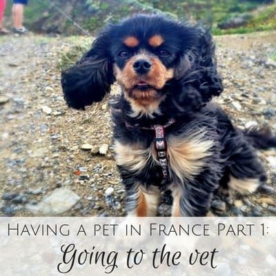 Having a pet in France Part 1: Going to the vet