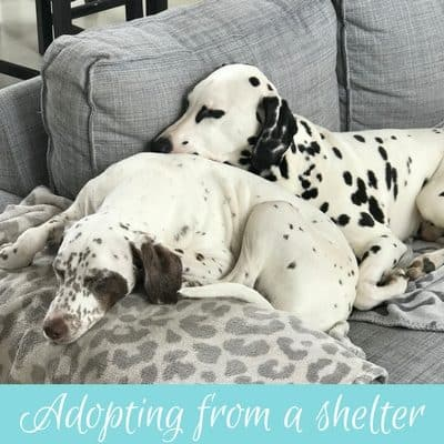 Having a pet in France Part 2: Adopting from a shelter