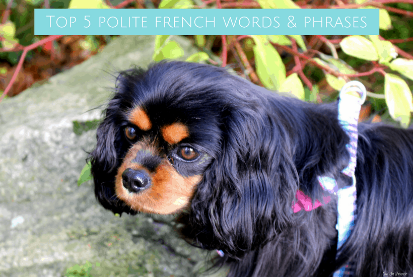 Top 5 polite french words & phrases1
