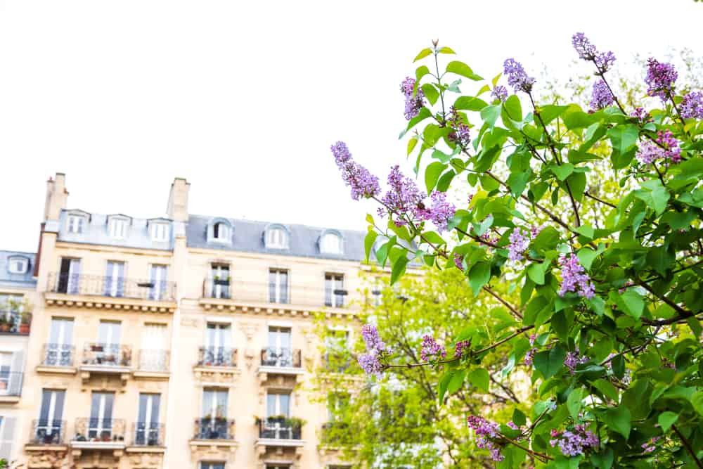what to know about vacation rentals in paris