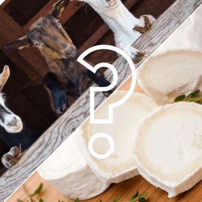 Quick French Lesson: Is chèvre goat cheese or a goat?